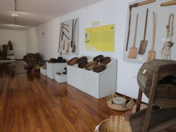 Museu Dr. Louzã Henriques